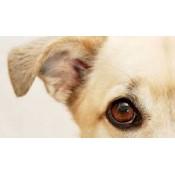 寵物耳朵清潔及治療系列