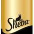 Sheba (14)