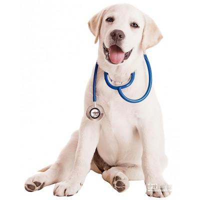 寵物保健用品 Supplement