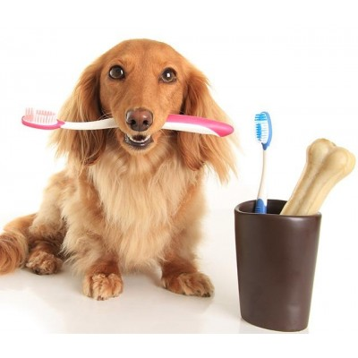 寵物口腔清潔系列